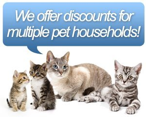Cat Grooming - Tampa, FL - Barker's Mobile Pet Grooming - We offer discounts for multiple pet households!