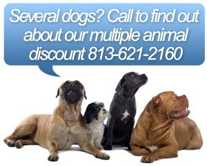 Dog Grooming - Tampa, FL - Barker's Mobile Pet Grooming - Several dogs? Call to find out about our multiple animal discount 813-621-2160