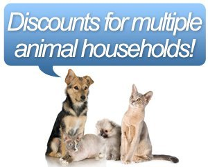 Pet Grooming - Tampa, FL - Discounts for multiple animal households!