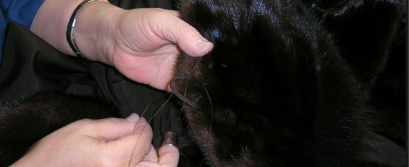 Fur repairs and alterations