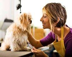 dog grooming - Davenport, IA  - Dog Styles Grooming Salon