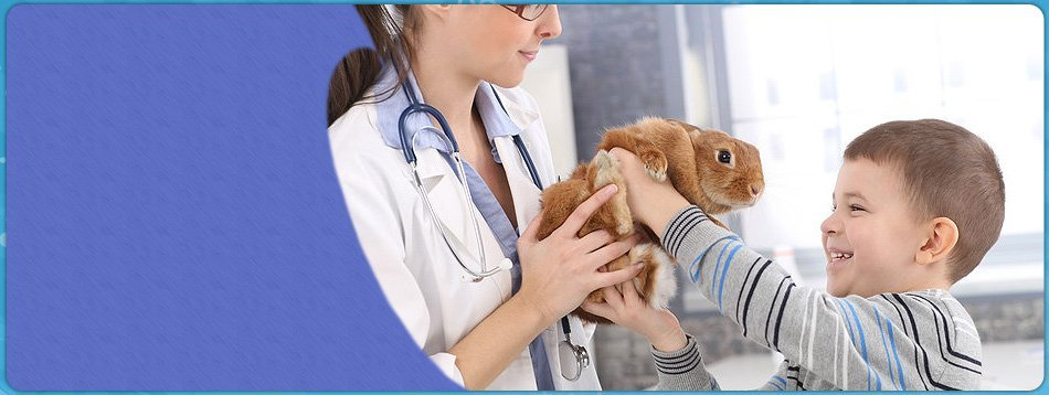 Pet care | Staten Island, NY | Peter Astarbi, DVM | 718-356-3010