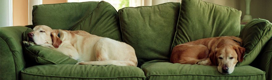 2 dogs on green couch