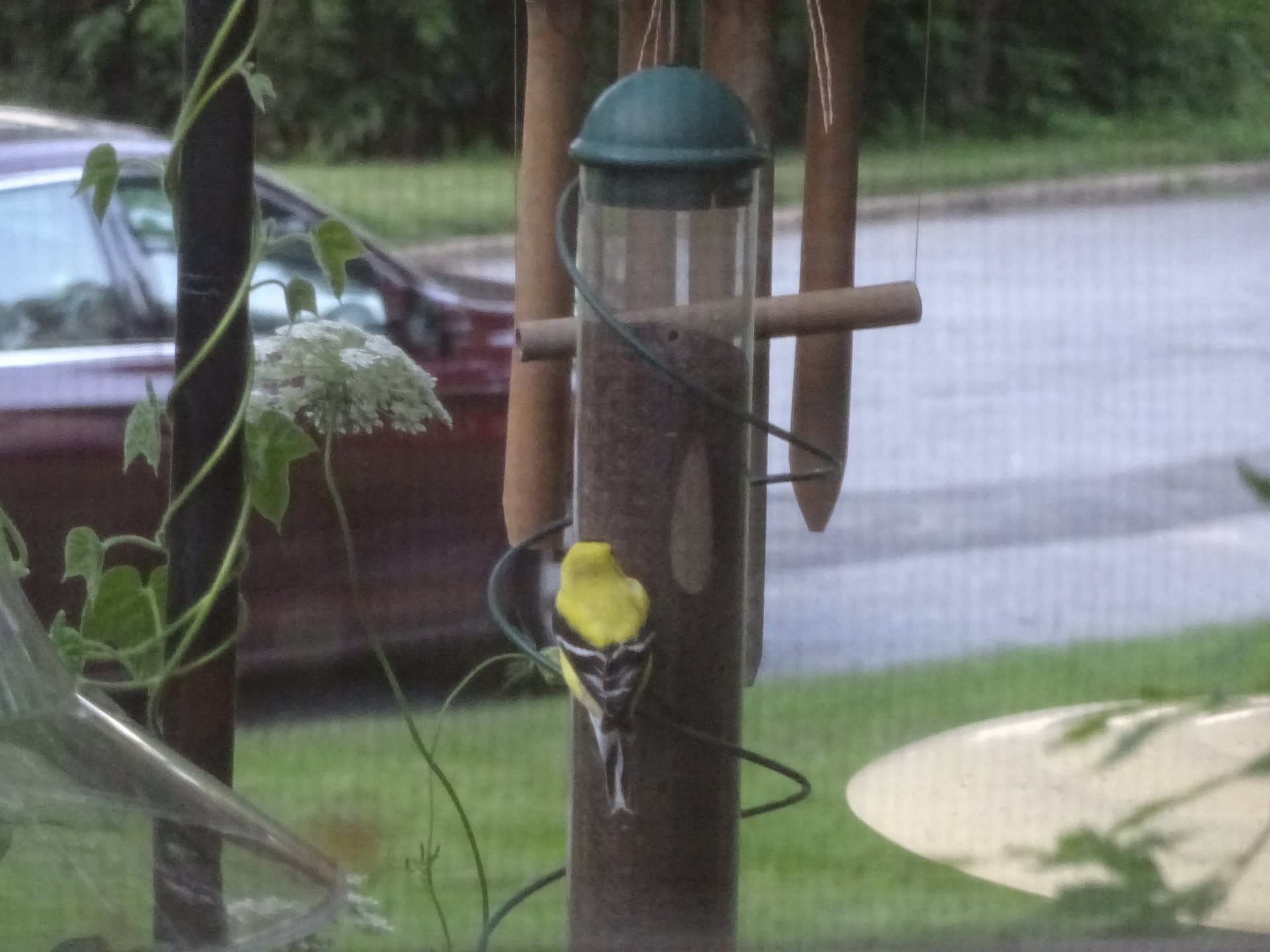 plastic feeder finch green amazon com inch garden port audubon woodlink feeders seed outdoor dp tube