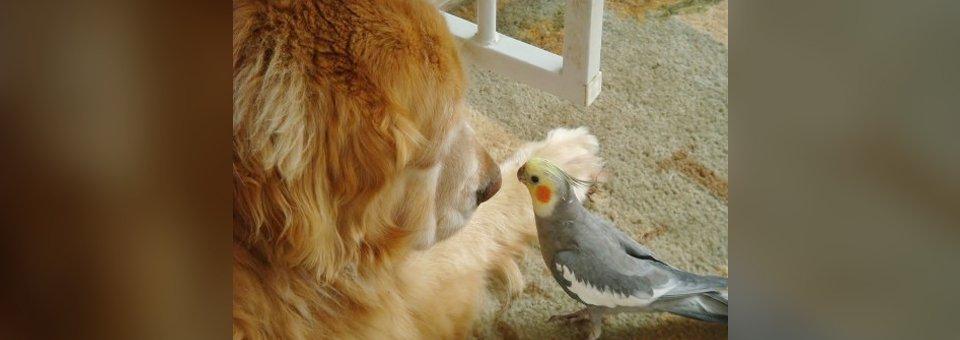 Indoor birds feed, small pet supplies store in Media