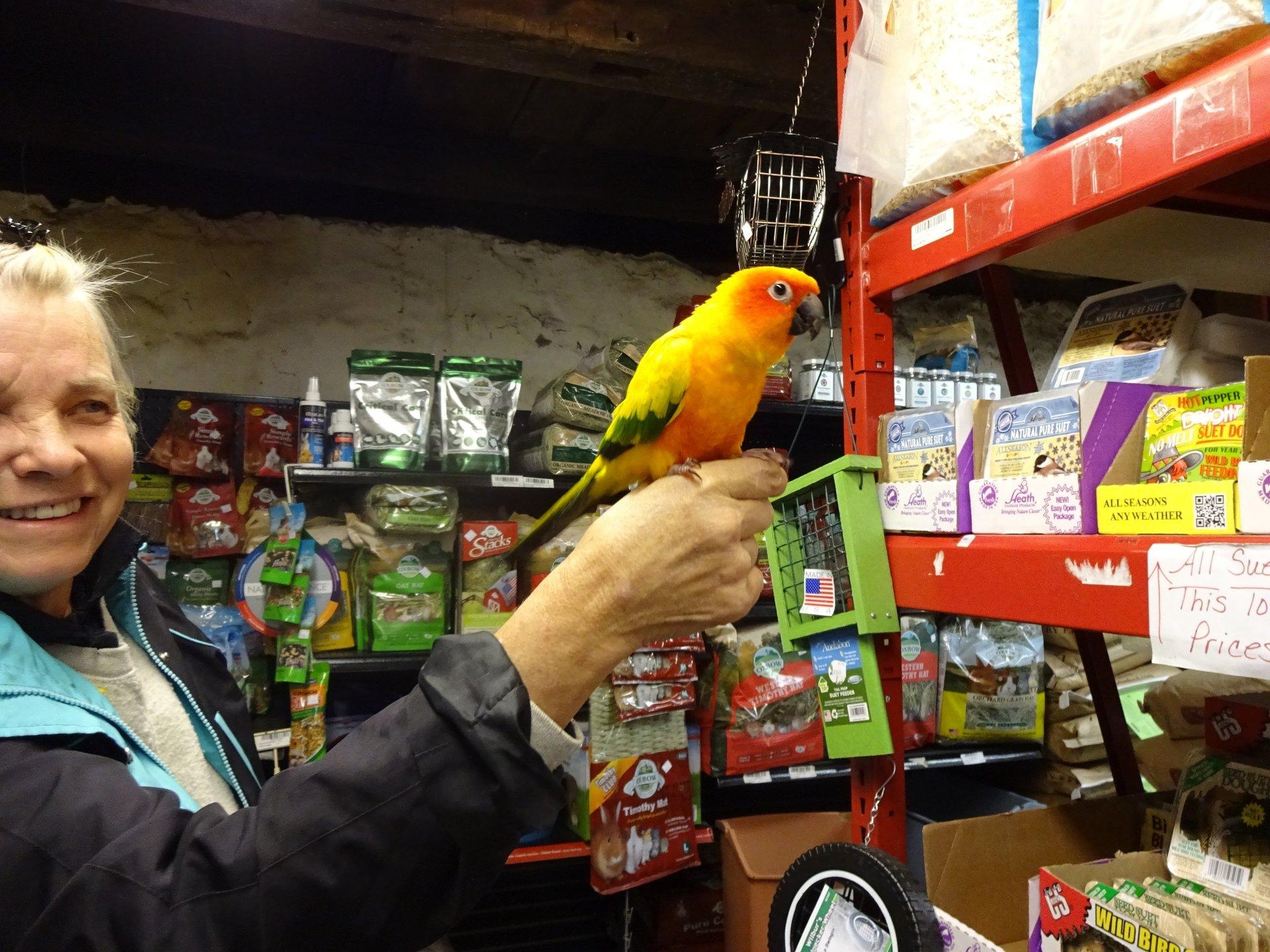 best Indoor birds feed, small pet supplies store in Media