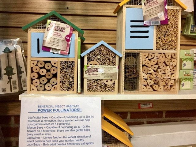 Insect Boxes