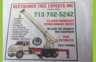 Tree experts