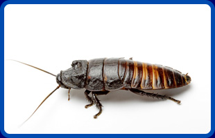 Insect Control  | Ewing, NJ | Pest Patrol Exterminating & Critter Control | 609-577-7075