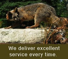 Animals - Cranberry Twp, PA - Halligan Taxidermy - deers in the woods - We deliver only excellent service every time