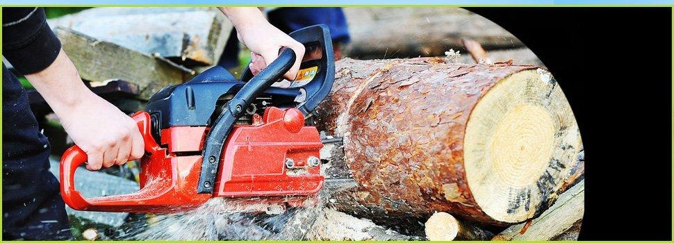 Chainsaw cutting a tree bark
