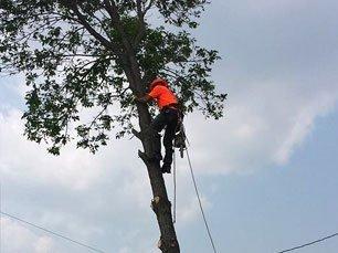 Cjs tree service tree care and maintenance blair ne around the clock tree care solutioingenieria Gallery