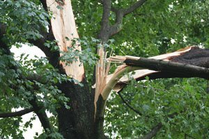 Tree Care Services    Urbana, IL   All Tree Steve's   217-530-2816