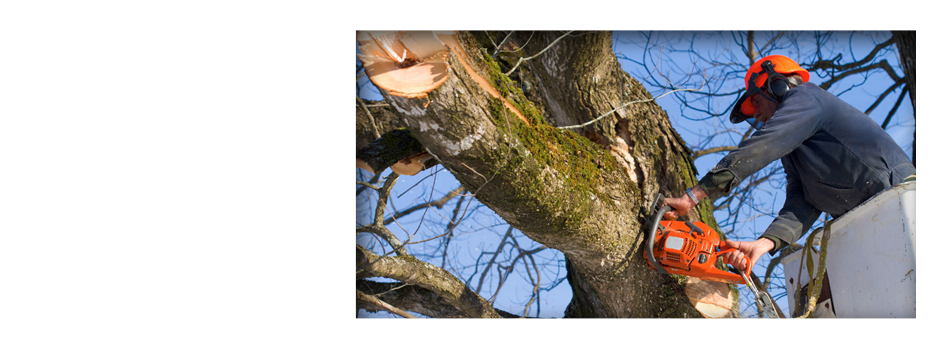 Tree Care Services  | Urbana, IL | All Tree Steve's | 217-530-2816