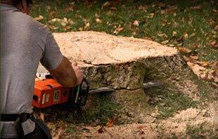 Stump Grinding  | Urbana, IL | All Tree Steve's | 217-530-2816