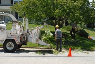 Tree Chipping Service  | Urbana, IL | All Tree Steve's | 217-530-2816