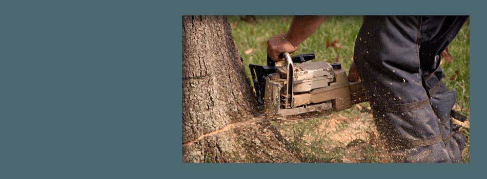 Tree Removal  | Urbana, IL | All Tree Steve's | 217-530-2816