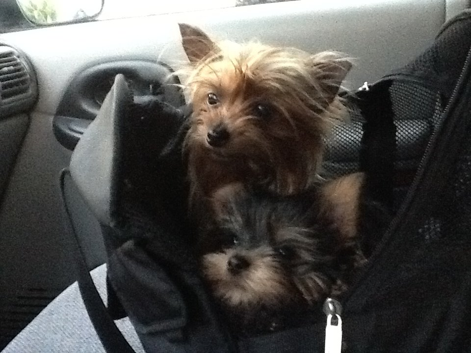 Pets in Taxicab