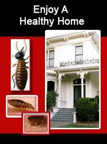 Pest Control Service - Racine, WI - MVP Pest Control