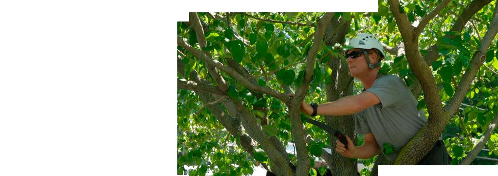 Pruning | Dayton, OH | Oakwood Lawn & Landscaping Co | 937-293-9693