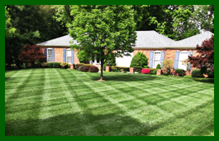 Weed Pulling | Louisville, KY | Big John's Lawn Care LLC | 502-287-0287