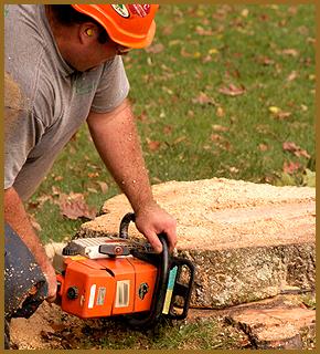 Tree Services - Rockford, IL - Soppa's Tree Service, Inc