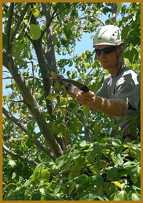 Soppa's Tree Service, Inc - Tree Removals - Rockford, IL