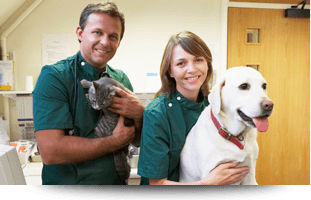 Pet Boarding | Forked River, NJ | Veterinary Associates | 609-693-1093
