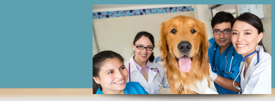 Emergency Pet Services | Forked River, NJ | Veterinary Associates | 609-693-1093