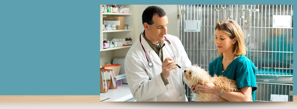 Specialty Pet Surgery | Forked River, NJ | Veterinary Associates | 609-693-1093