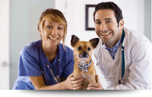 Pet Preventative Health Care | Forked River, NJ | Veterinary Associates | 609-693-1093