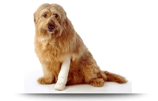 Pet Surgery | Forked River, NJ | Veterinary Associates | 609-693-1093