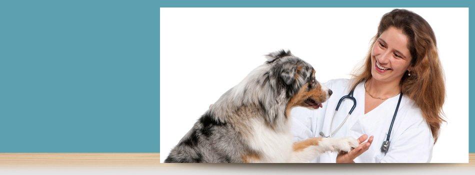 Veterinary Services | Forked River, NJ | Veterinary Associates | 609-693-1093