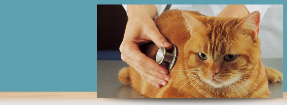 Internal Pet Medicine | Forked River, NJ | Veterinary Associates | 609-693-1093