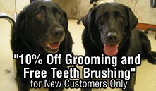 Pet Grooming - Arlington Heights IL - All Pets Groomed, Inc. - 10% Off Grooming and Free Teeth Brushing