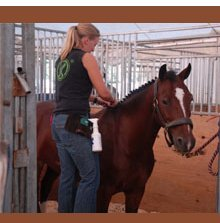 Stables - Saint Joseph, MI - Royal Crest Boarding Stable And Riding Lessons