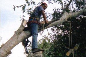 firewood | New Braunfels, TX | Cornelius Contracting  | 830-629-3662