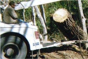 underbrush removal | New Braunfels, TX | Cornelius Contracting  | 830-629-3662