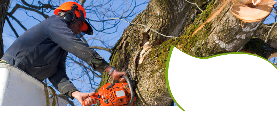 tree services | New Braunfels, TX | Cornelius Contracting  | 830-629-3662