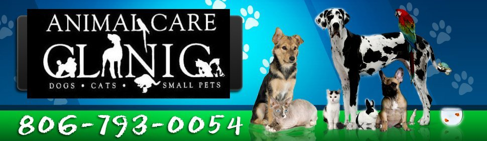 Small Animal Clinic - Animal Care Clinic of Lubbock - Lubbock, TX and South Plains