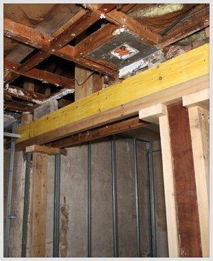 Termites destroying houses