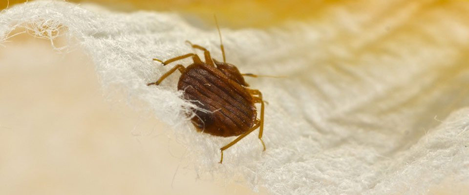 exterminators treatment cny for bug bugs bed syracuse exterminator bee cheap gone bedbug