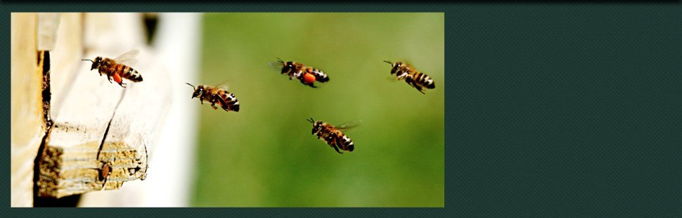 Superior Termite Pest Control Inc Exterminators Bayville Nj