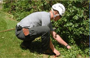 spring cleanups | Lakewood, NJ | Corona Tree Service LLC | 732-668-7524