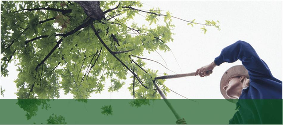 fall cleanups | Lakewood, NJ | Corona Tree Service LLC | 732-668-7524