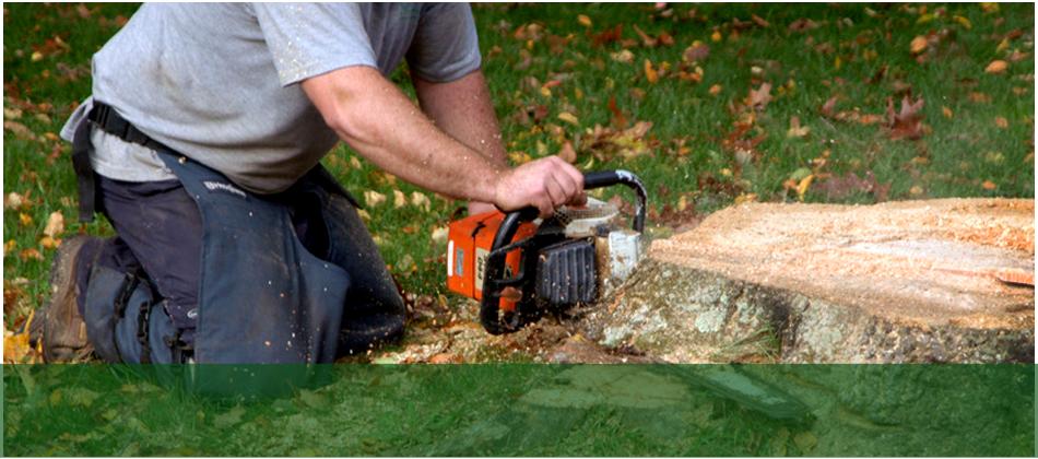 arborist | Lakewood, NJ | Corona Tree Service LLC | 732-668-7524