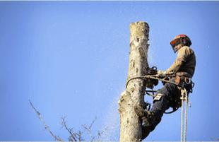 tree service | Lakewood, NJ | Corona Tree Service LLC | 732-668-7524