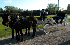 Carriage Rides | Saint George, KS | Black Jack Hills | 785-494-2707