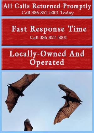 Bat Removal - Daytona Beach, FL - Animal Control Services, Inc.