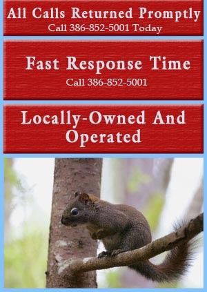 Squirrel Removal - Daytona Beach, FL - Animal Control Services, Inc.